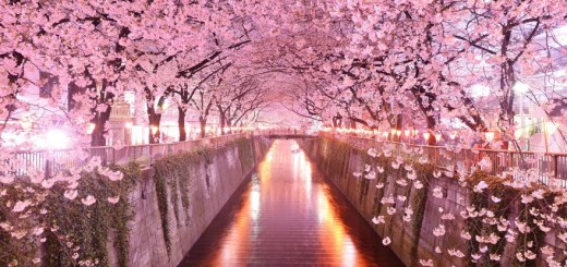 Japan's Sakura Tunnel