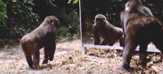 animal reactions, watching in mirror, hilarious video