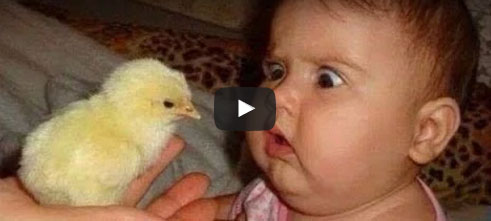 funny, funny video, hilarious videos