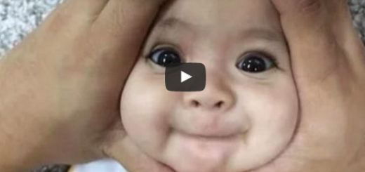 funny video, funniest videos