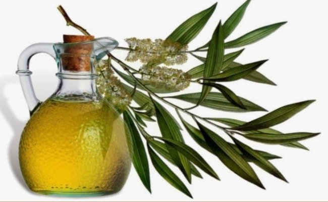 Eucalyptus oil benefits